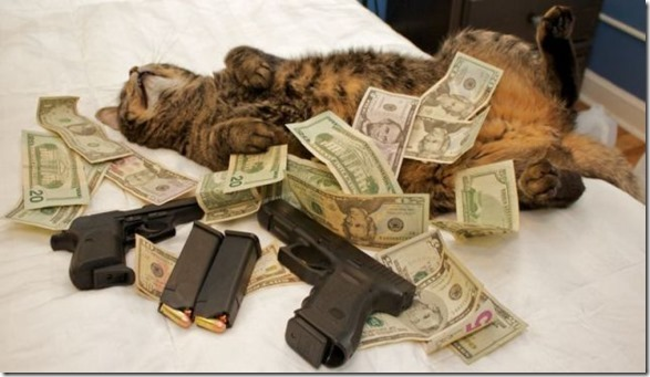 rich-wealthy-cats-10