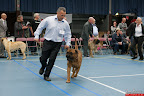 20130510-Bullmastiff-Worldcup-0670.jpg