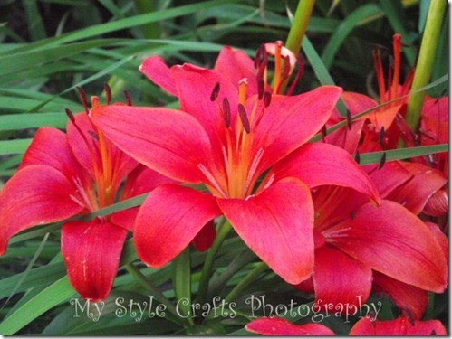 red lilies - watermarked artfire