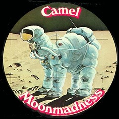 camel_front