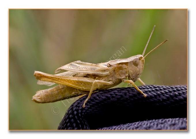 Grasshopper 5 lm