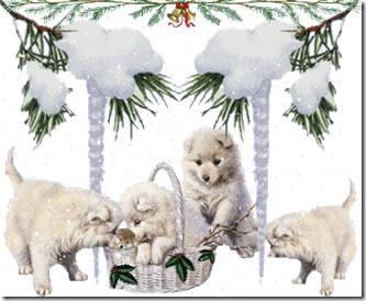ositos navidad