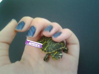 Uñas magnéticas lara nails paso a paso, tortuga