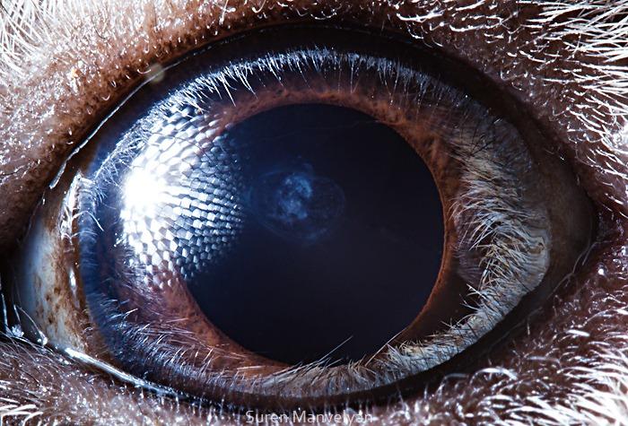 animal-eyes-18