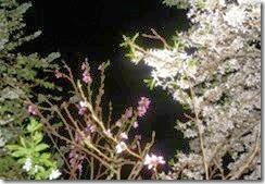 oclarinet.blogspot.com - De noite também há flores.Mar.2014