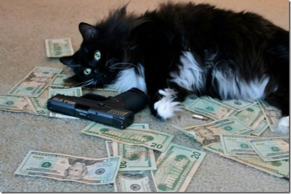 rich-wealthy-cats-17