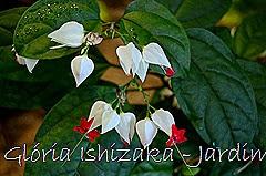 Glória Ishizaka - Jardim Botânico Nagai - Osaka 42