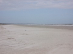 cumberland-island 051
