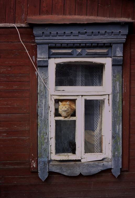 535 la ventana de los gatos