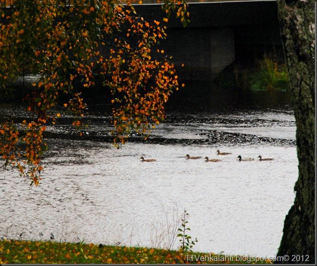 syksy alkukulku tulva 018