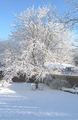 Snowstorm 12.30.2012 first