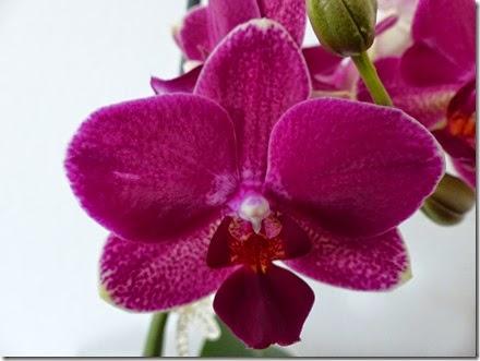 2015_04 Orchideen (16)