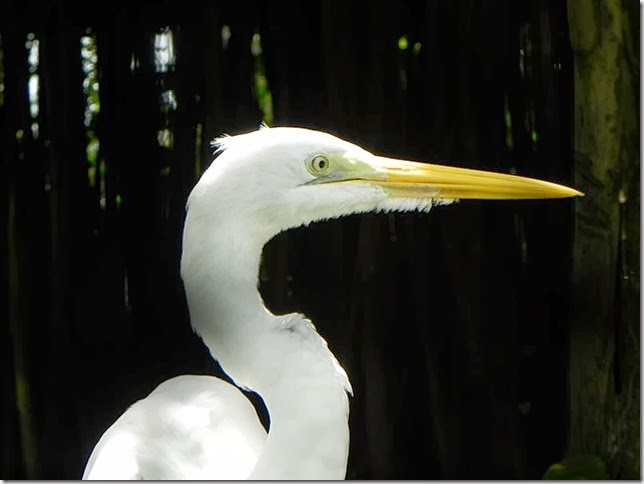 Guyana_Zoo_DSCN8205