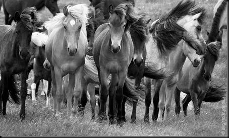 pm_20110625_horsesBW1