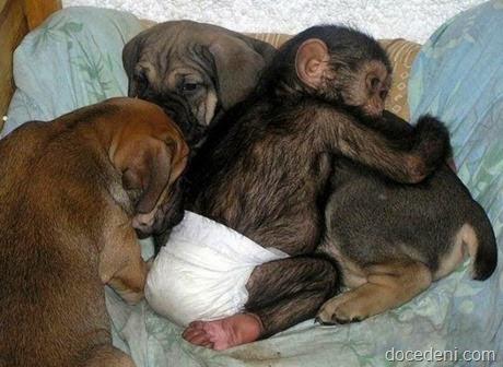 macaco e cadela2
