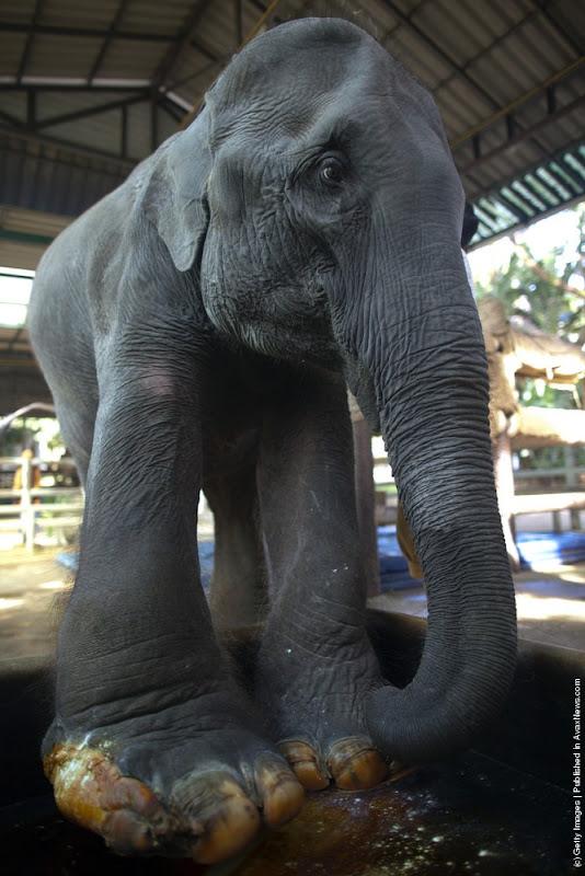 elephant-hospital-1