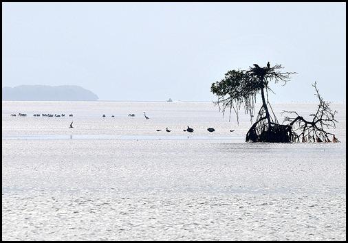 01h3b - Florida Bay