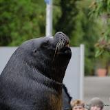 Heidelberger-Zoo (8 von 49).jpg