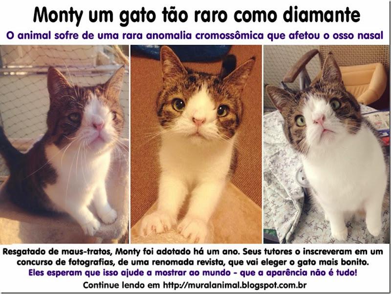 monty-gato-raro