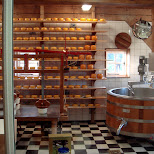 cheese factory in Zaandam, Noord Holland, Netherlands