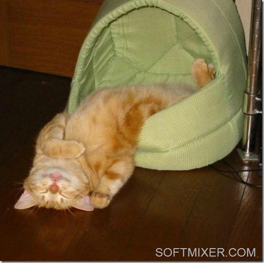 slp_cats_20