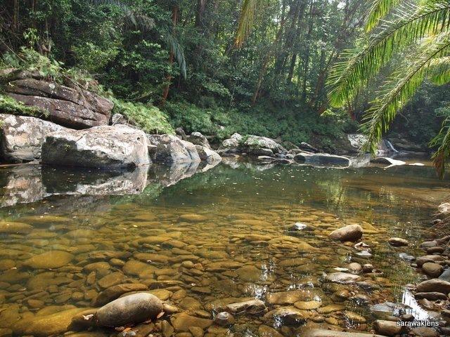 river_in_sarawak_05