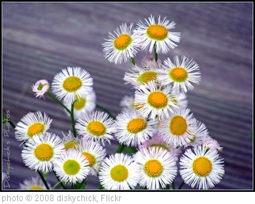 'Wild flowers' photo (c) 2008, diskychick - license: http://creativecommons.org/licenses/by-nd/2.0/