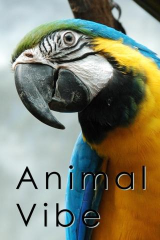 Animal Vibe