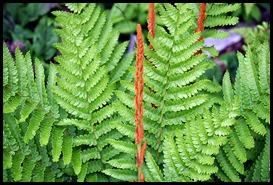 04v8 - Flowers - Ferns