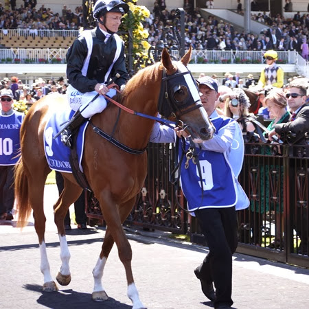coolmore_lmissy longstocking