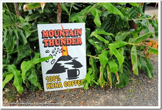 Hawaii: Thunder Mountain Coffee Plantation