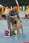 20130511-BMCN-Bullmastiff-Championship-Clubmatch-1638.jpg