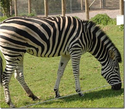 marwell zoo 040