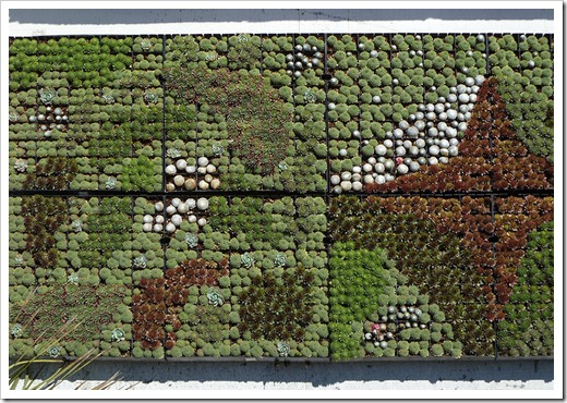 111001_succulent_gardens_16