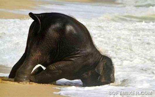 1245-слон-жара-животные-фото-