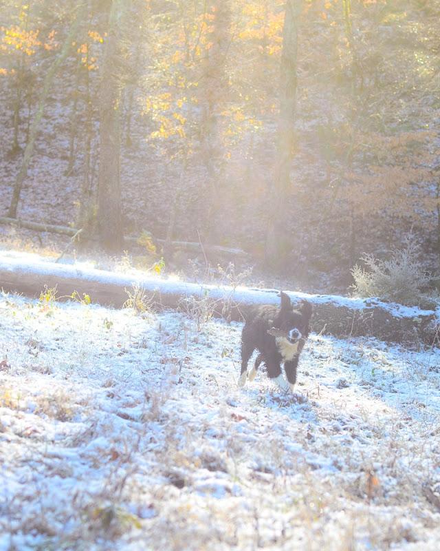 snow dog-3523