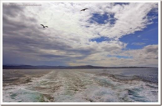140325_Monterey_0065