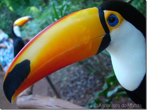 Tucanos Parque das Aves Foz do Iguaçu BlogTurFoz