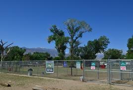great Bishop Dog Park