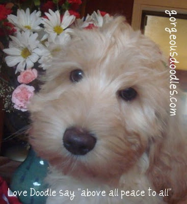 Love Doodle say<br /> &quot;Above all Peace to all&quot;