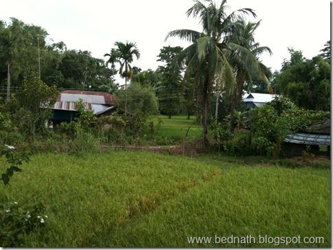 bed nath blog (5)