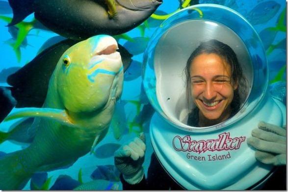 seawalker-photogenic-fish-5