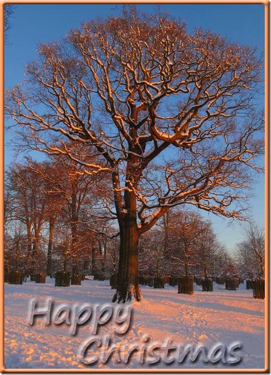 Christmas-2013-ecard