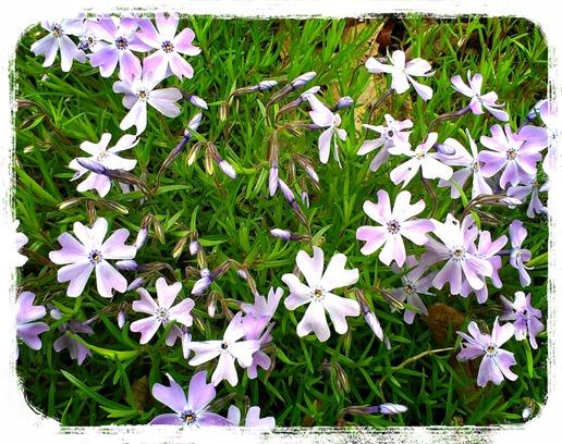 LINEcamera_share_2013-05-19-19-08-32