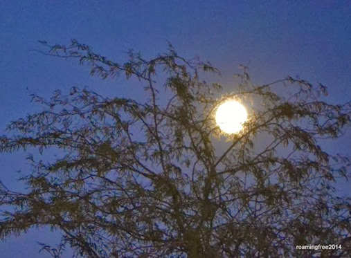 Full Moon_January 15th
