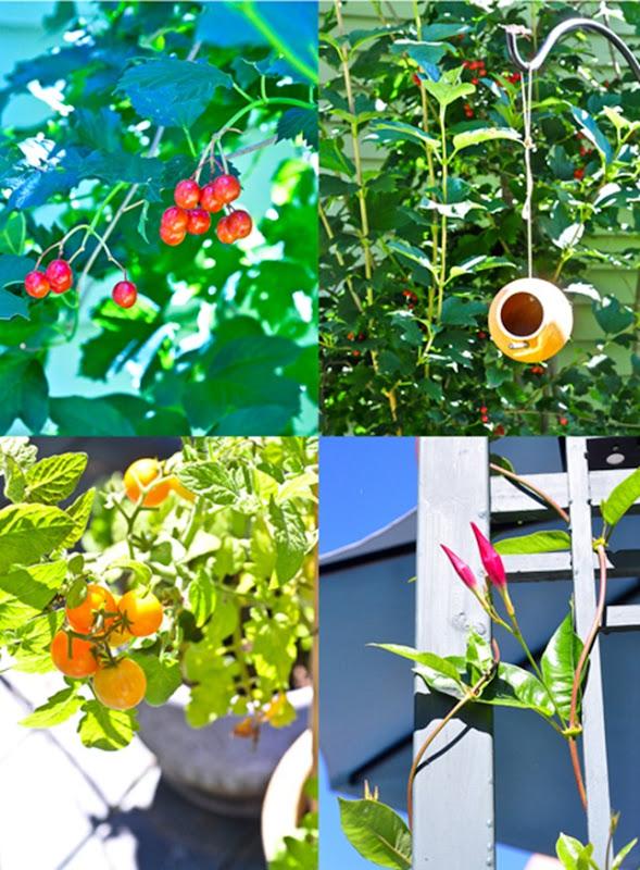 garden_LR