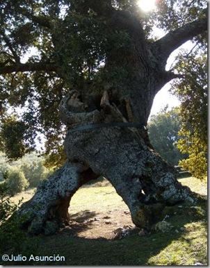 Encino de las tres patas - Monumento natural de Navarra