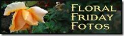 Floral_Friday_Fotos