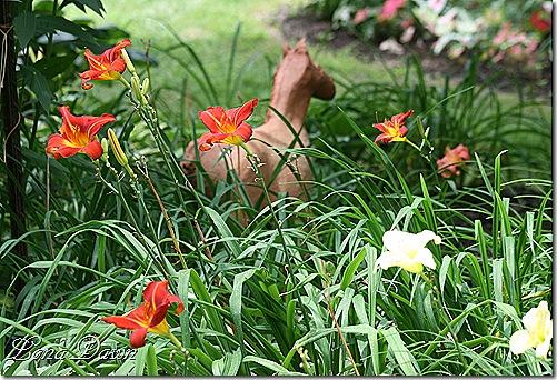 LF_Horse_Lilies