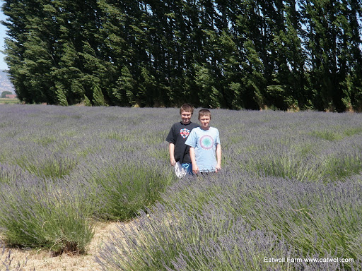 Dad made them stand in the lavender field for this photo.